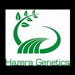 hazera genetics